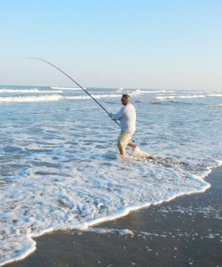 North carolina surf fishing photo gallery red drum for Surf fishing virginia beach