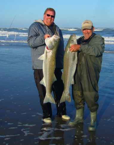 Striped Bass, caught on Virginia Barrier Islands
