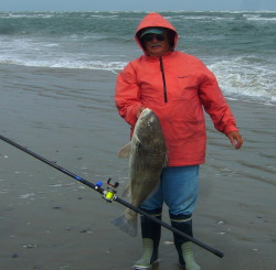 Black Drum caught by Jim, Virginia barrier islands